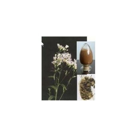 Snakeroot (Rauwolfia serpentina) 120 capsules 300mg