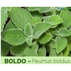 Boldo - (Peumus boldo)  30g