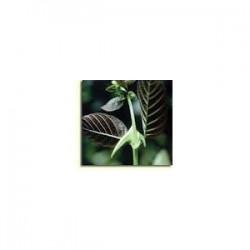Cat´s claw - Unha de Gato - (Uncaria tormentosa) 500g