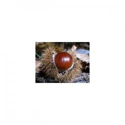 Chestnut (Aesculus hippocastanum) 100 Pills