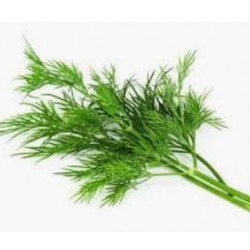Dill  (Anethum graveolens)  30g