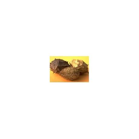 Luffa operculata  - Buchinha do Norte - 10 per package